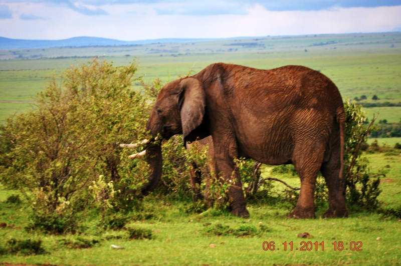 Elephanta at Masai Mara : African Safari