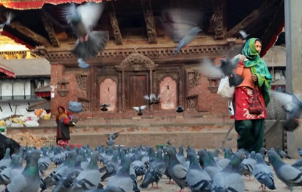 Pigeons at Durbar Square