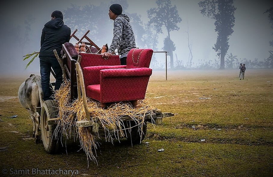 Bullock cart and hay