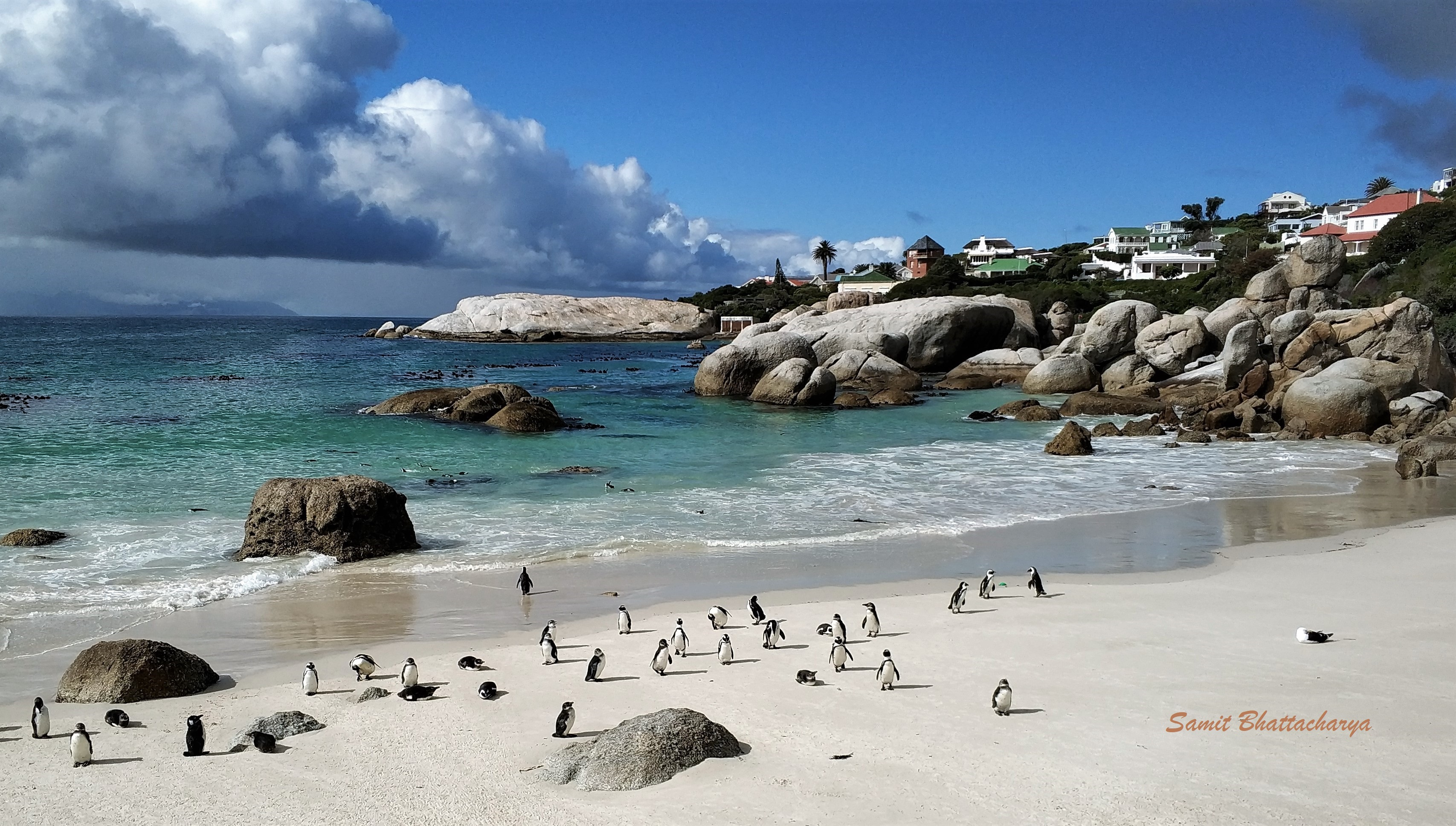Penguins Colony Boulders Beach: Simon's Town